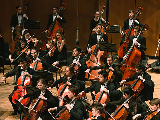nuso cellos and basses